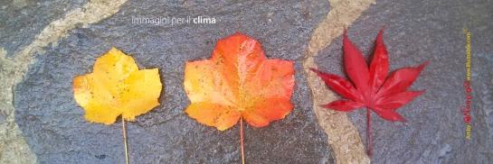 immagini per il clima_nedda castronai